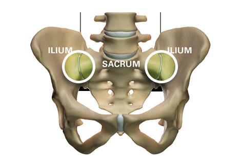 Pelvis Anatomy Ilium Sacrum